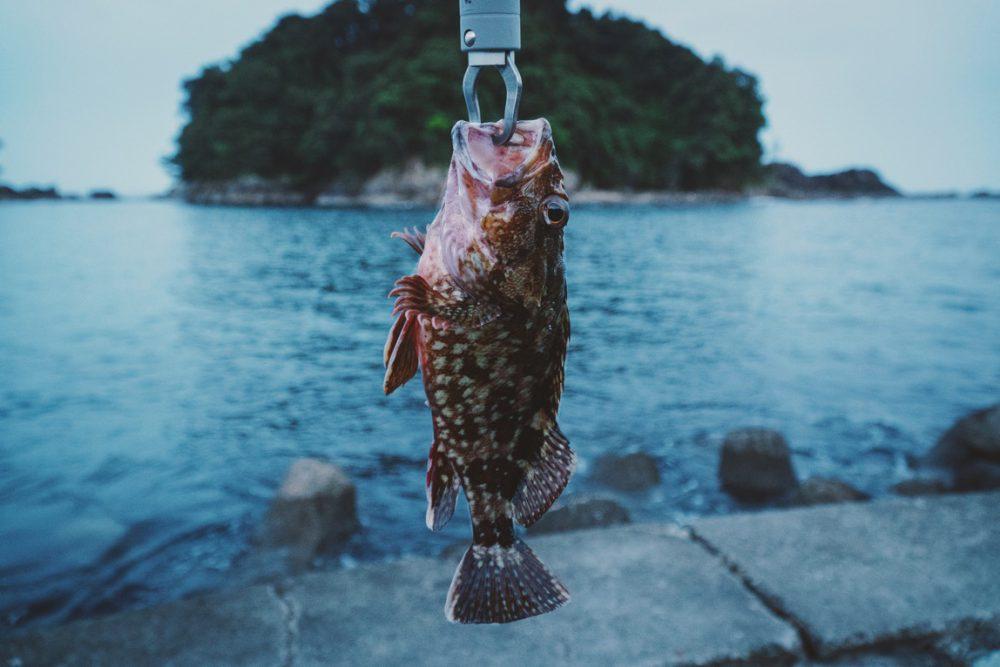 ライトジギングのカサゴ釣り【Fishing Vlog9】