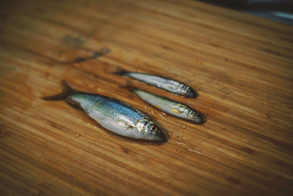 梅雨の晴れ間の小鮎釣り【Fishing Vlog】
