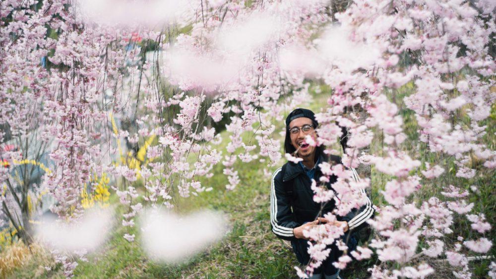 桜撮ってきました。