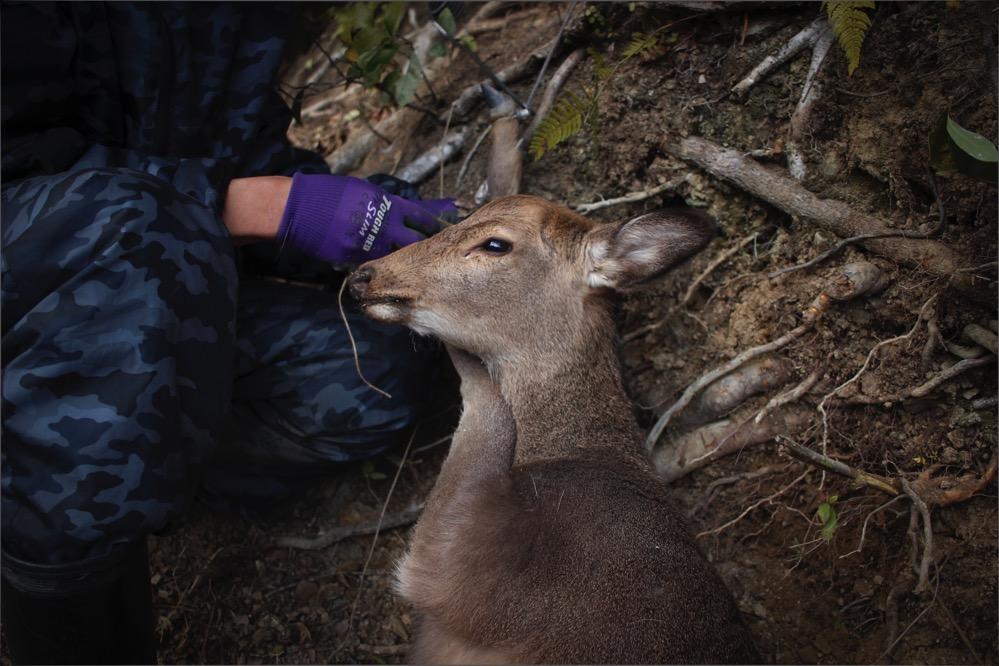 鹿を解体してみたいと考えているヒトは是非徳島県の家へどうぞ