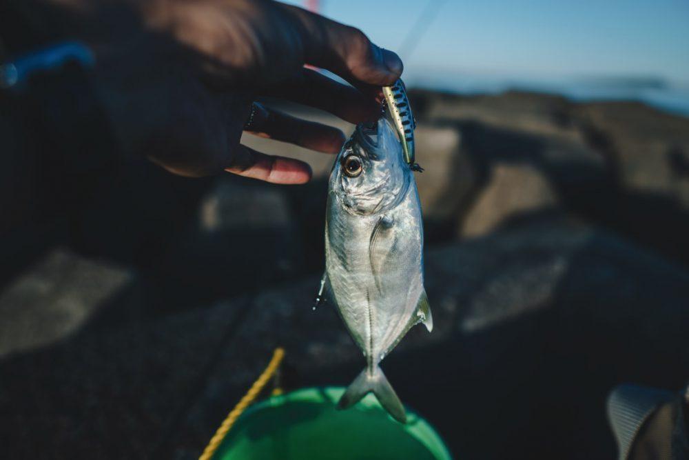 【徳島県】メッキ釣りの楽しみ方