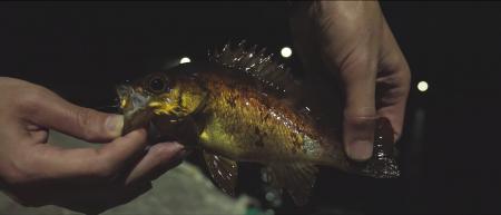 男二人で釣りキャンプ in 四国の離島【YouTube動画】