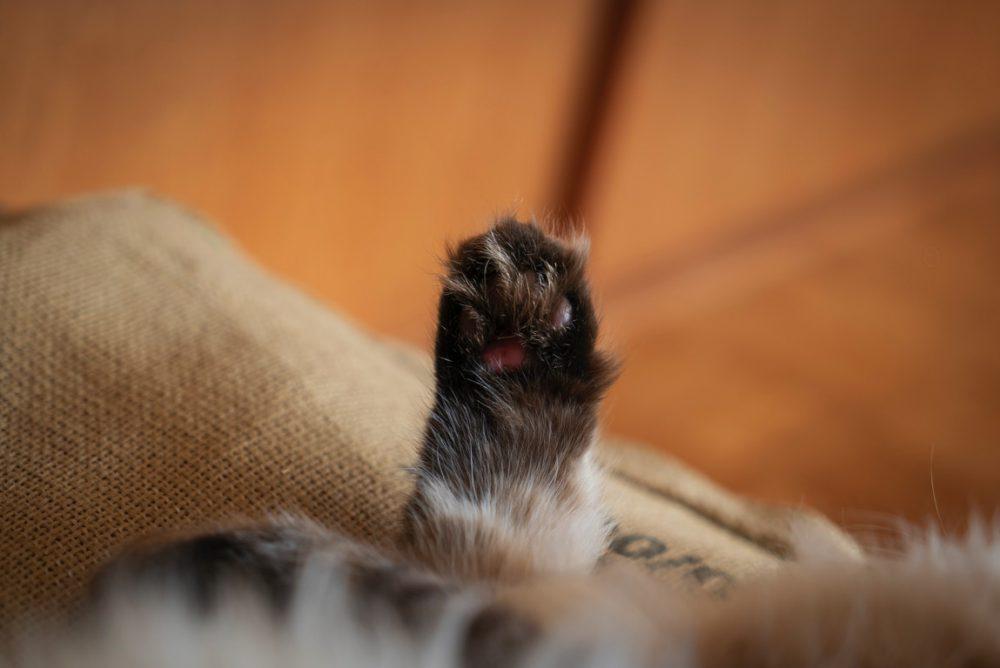 怪我?乾燥?で猫の肉球の剥がれた時にボクがとったひとつの方法