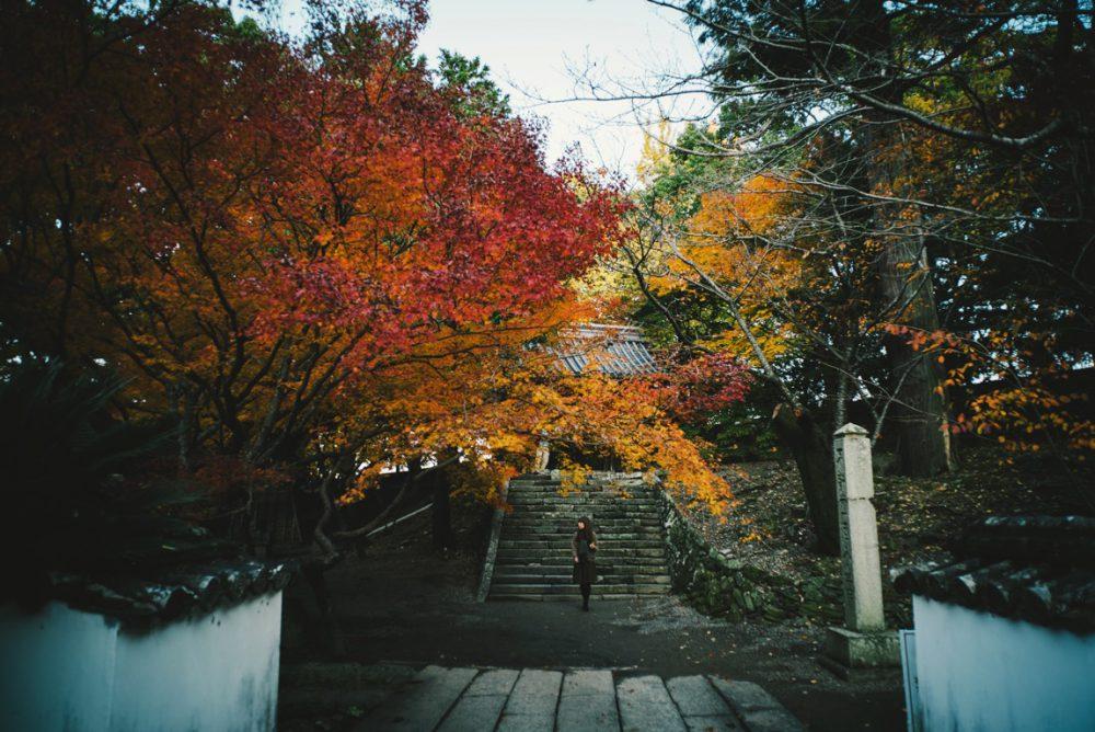SONY a7シリーズとVoigtlander21mmF4で撮った秋の紅葉写真📷